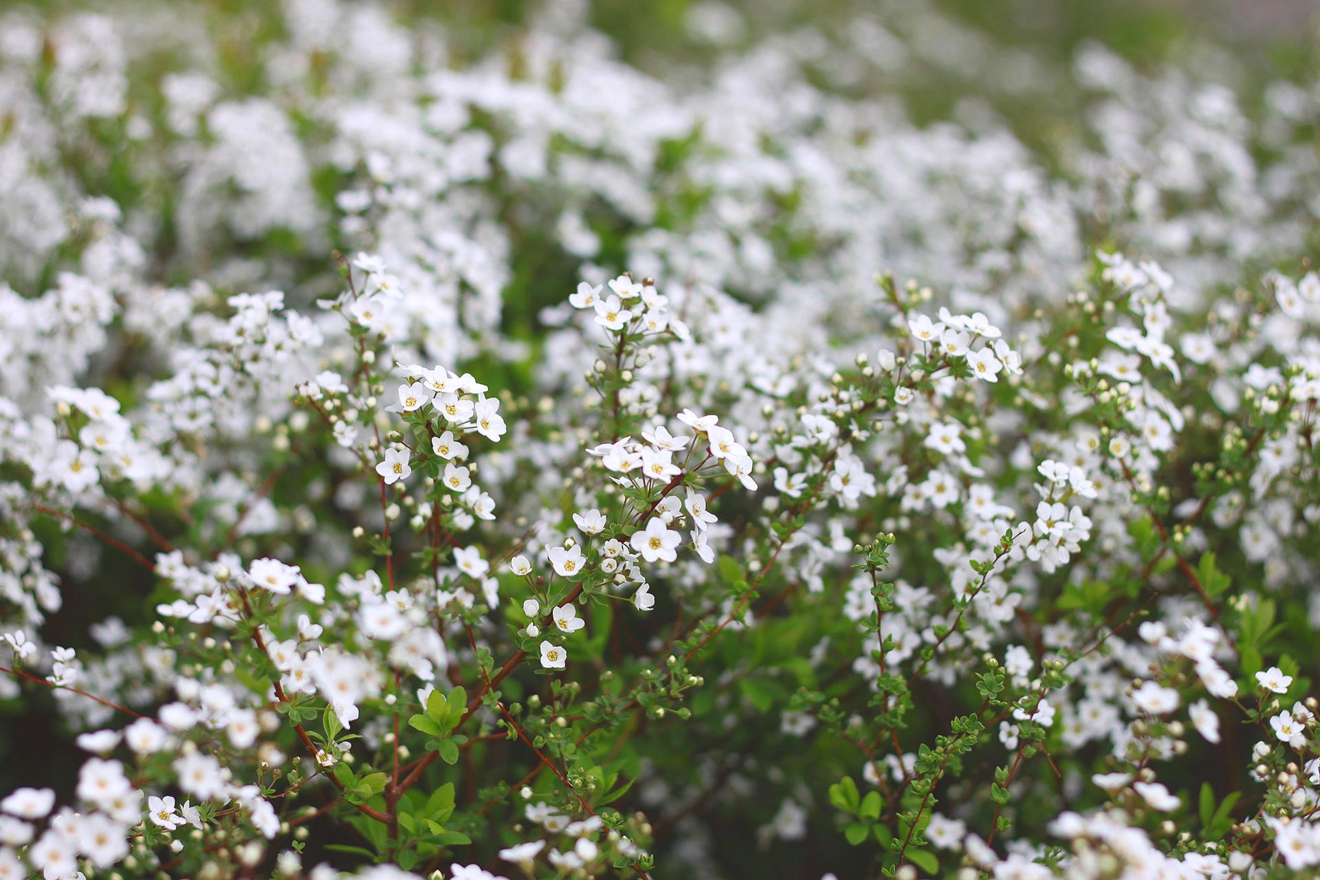 whiteflower-by-yuki-matsumura