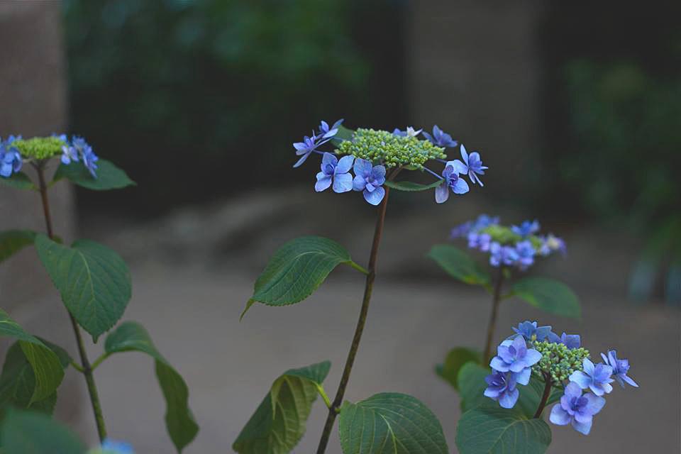 yukisphoto